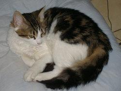 Sopra , chat Gouttière