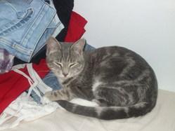 Titus, chat Gouttière