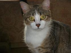 Paillette, chat Gouttière