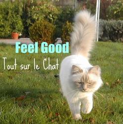 Feel Good, chat Birman