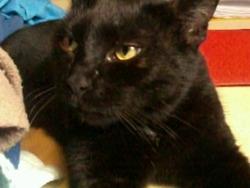 Félicie, chat Gouttière