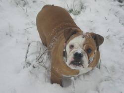 Félie, chien