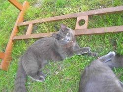 Félie, chat