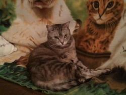 Felin, chat Gouttière