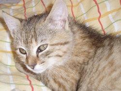 Feline, chat