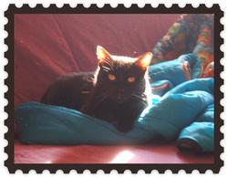 Féline, chat Gouttière