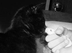 Félix Dit Félixm, chat Gouttière