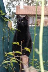 Félix, chat Gouttière
