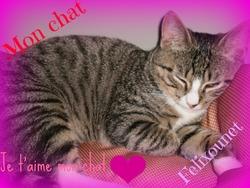 Félix , chat