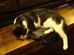 Félix, chat