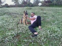 Felix, chien Berger allemand