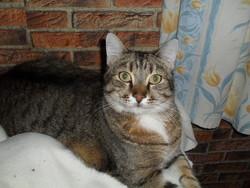 Felix, chat Gouttière