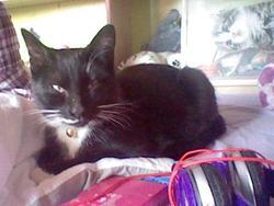 Félix Au Paradis, chat Gouttière
