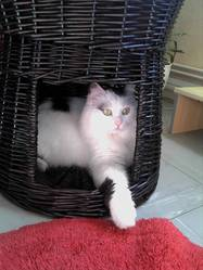 Félixou, chat