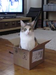 Félonie, chat
