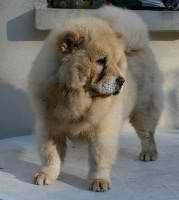 Fenia, chien