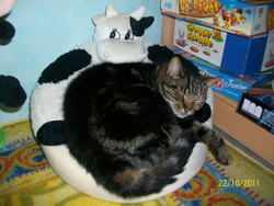 Fernande, chat Gouttière