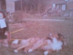 Février  Rip, chien Colley à poil long