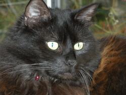 Minouchette, chat Gouttière