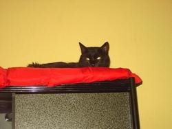 Twister, chat Gouttière