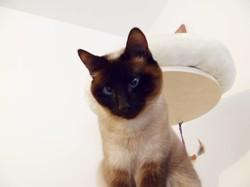 Fibie, chat