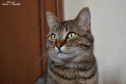 Ficel, chat Gouttière
