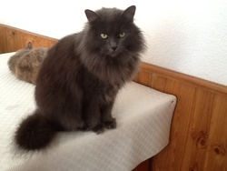 Ficelle, chat