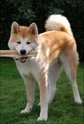 Ficellle, chien