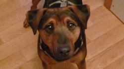 Fidji, chien Jagdterrier