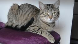 Fidji, chat Gouttière
