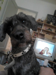 Fidjie, chien