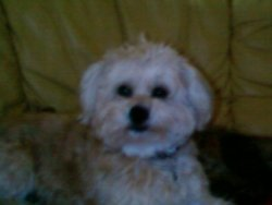 Fifi, chien