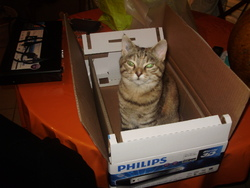 Fifille, chat