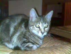 Fifille , chat