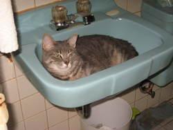 Fifille Zoé, chat Gouttière