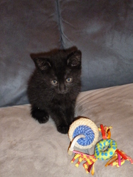 Figaro, chat