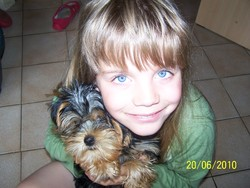Fiky, chien Yorkshire Terrier