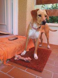 Filetta, chien