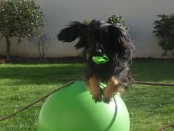 Filou, chien
