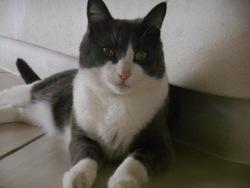 Filou , chat Gouttière