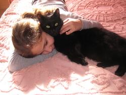 Filou Mon Bébé, chat Européen