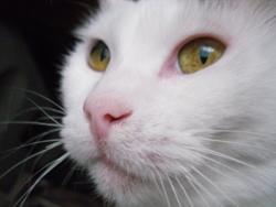 Filoute, chat Gouttière