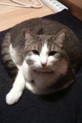 Findus, chat Gouttière