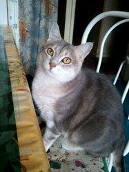 Finette , chat