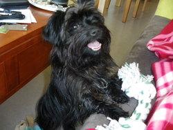 Finn, chien