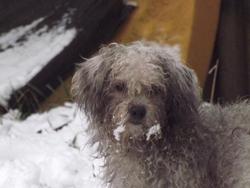 Fiona, chien