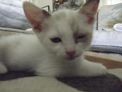 Firmin, chat Gouttière