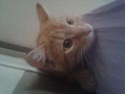 Flamby, chat Gouttière