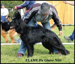 Flame, chien Berger allemand