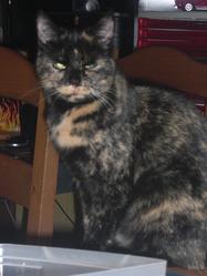 Flaming, chat Gouttière